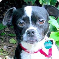 Adopt A Pet :: BRIGETTE - Marina Del Ray, CA