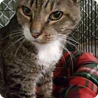 Adopt A Pet :: Rudolph - Freeport, NY