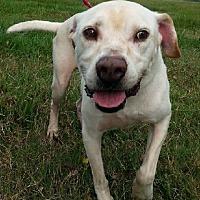 Adopt A Pet :: Stan - Simsbury, CT