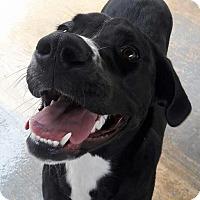 Adopt A Pet :: Queenie - San Antonio, TX