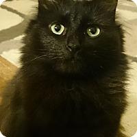Adopt A Pet :: Nuela - Morganton, NC