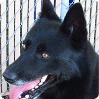 Adopt A Pet :: Maxwell - Chula Vista, CA