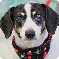 Adopt A Pet :: Daisy - Wenatchee, WA