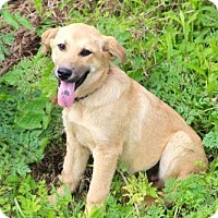 Adopt A Pet :: PUPPY BRANSON - Norfolk, VA
