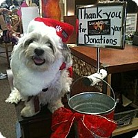 Adopt A Pet :: Barclay - Scottsdale, AZ