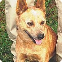 Adopt A Pet :: Harley - Providence, RI