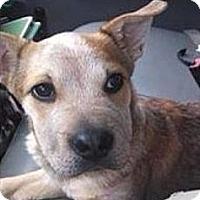 Adopt A Pet :: Phoenix - New Boston, NH