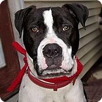 Adopt A Pet :: Kindall - Chattanooga, TN