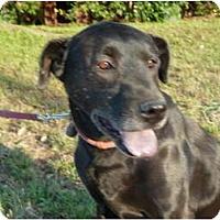 Adopt A Pet :: Thor - Mission Hills, CA