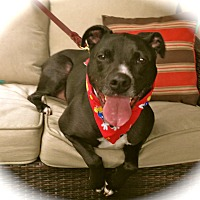 Adopt A Pet :: ADOPTION PENDING-Chappie - Burbank, CA