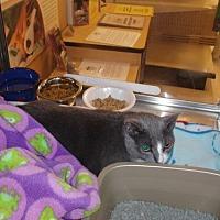 Adopt A Pet :: Olivia - Marlboro, NJ