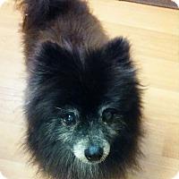 Adopt A Pet :: Cole - Ogden, UT