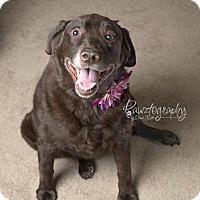 Adopt A Pet :: Joelle - Scottsdale, AZ