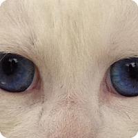 Adopt A Pet :: Ninu - Houston, TX