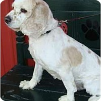 Adopt A Pet :: Ralphie - Sugarland, TX