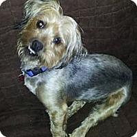 Adopt A Pet :: Harvey - Martinsburg, WV