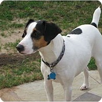 Adopt A Pet :: Buster in Houston - Houston, TX