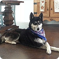 Adopt A Pet :: Bruce - Gilbert, AZ