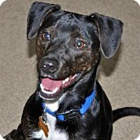 Adopt A Pet :: Lucy - Port Washington, NY