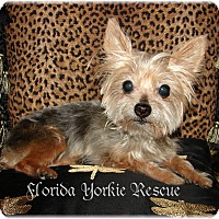 Adopt A Pet :: MISTY - Palm City, FL
