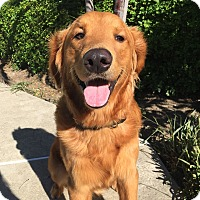 Adopt A Pet :: Buddy - Mission Viejo, CA