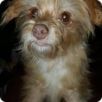 Adopt A Pet :: Ella - North Little Rock, AR
