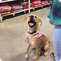 Adopt A Pet :: Goldie - North Brunswick, NJ