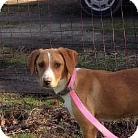Adopt A Pet :: Sophie - Marlton, NJ