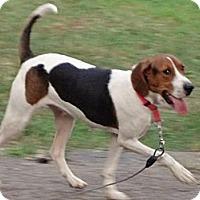 Adopt A Pet :: Minnie - Byrdstown, TN