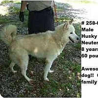 Adopt A Pet :: # 258-09 @ Animal Shelter - Zanesville, OH