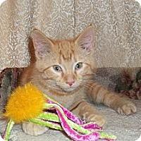 Adopt A Pet :: Topaz - Acme, PA