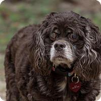 Adopt A Pet :: Sarah - Tallahassee, FL