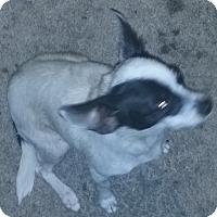 Adopt A Pet :: Cruella - Orlando, FL