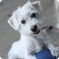 Adopt A Pet :: Arthur - Canoga Park, CA
