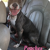 Adopt A Pet :: Peaches - Cheney, KS