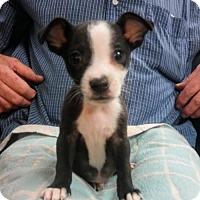 Adopt A Pet :: Jason - oakland park, FL