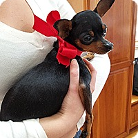 Adopt A Pet :: Petunia - Oakland, CA