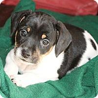 Adopt A Pet :: Zebra - Hastings, NY