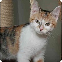 Adopt A Pet :: Juliet - Cincinnati, OH