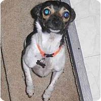 Adopt A Pet :: Maggie - Toronto/Etobicoke/GTA, ON