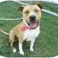Adopt A Pet :: Nico - Los Angeles, CA