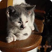 Adopt A Pet :: Nolan - Riverside, RI