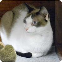 Adopt A Pet :: Felix - Naples, FL