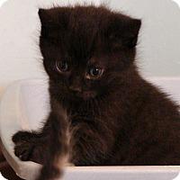 Adopt A Pet :: Royal Family---Kate - Florence, KY