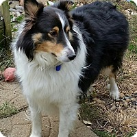 Adopt A Pet :: O'Day - COLUMBUS, OH