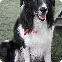 Adopt A Pet :: Rex - Midwest (WI, IL, MN), WI