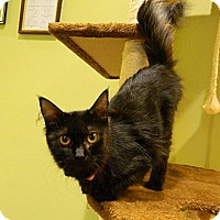 Adopt A Pet :: Angela - The Colony, TX