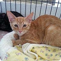 Adopt A Pet :: Cayenne - Fountain Hills, AZ