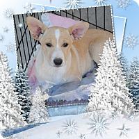 Adopt A Pet :: Gizmo - Crowley, LA