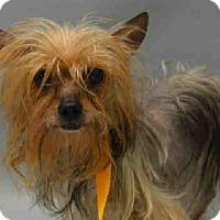 Adopt A Pet :: Gypsy - Bernardston, MA